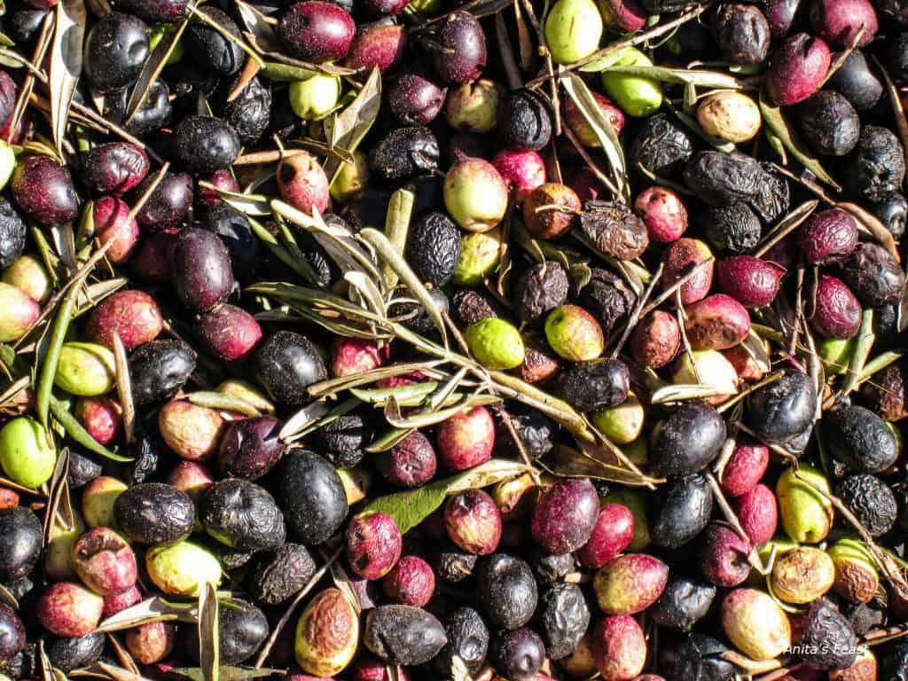 Beldi olives