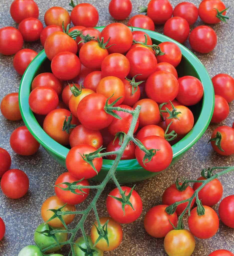 Super Sweet 100 Tomatoes