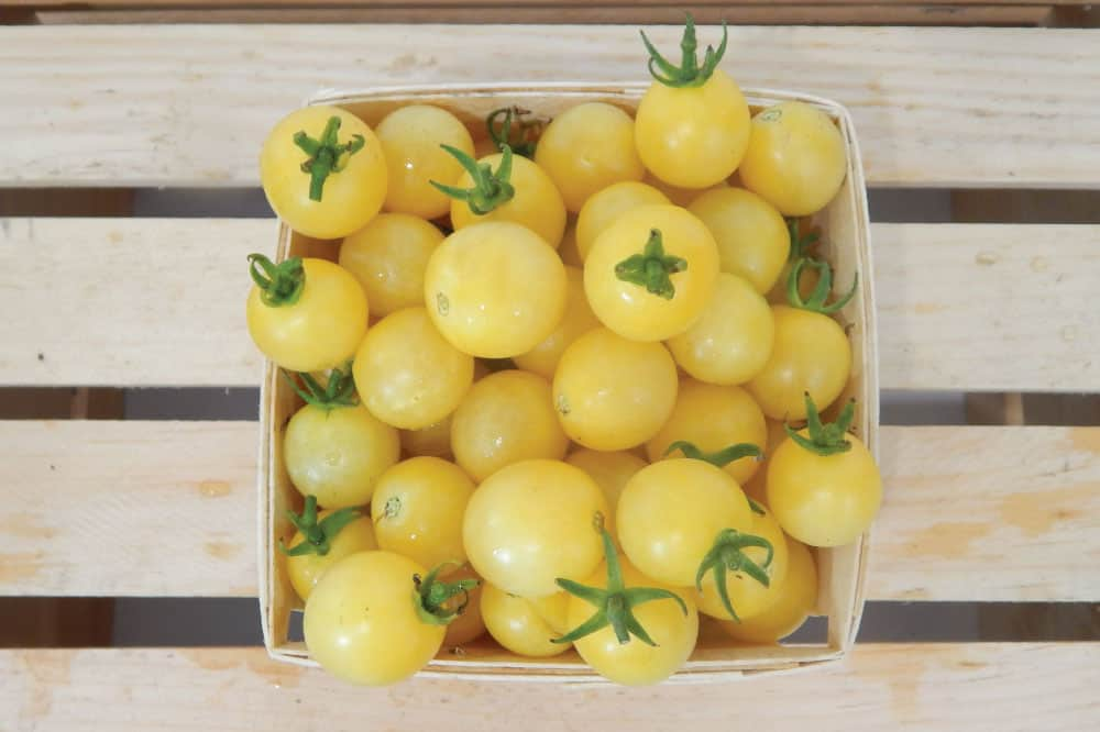 Italian Ice Tomatoes
