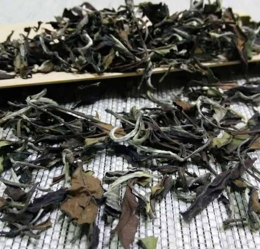 Gong Mei white tea