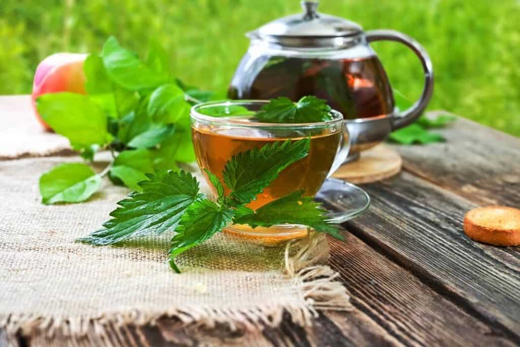 Easy Nettle Tea Recipes