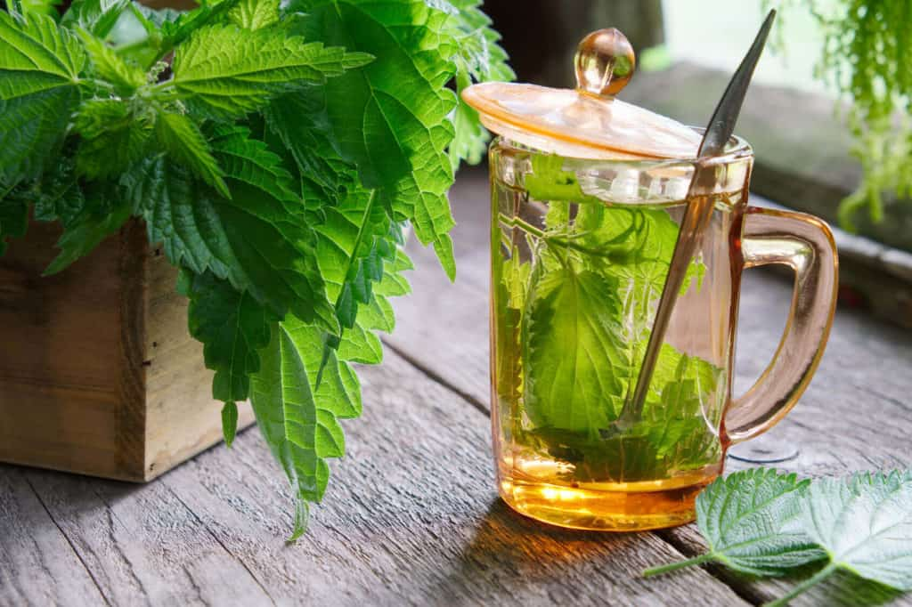 Side Effects of Nettle Tea