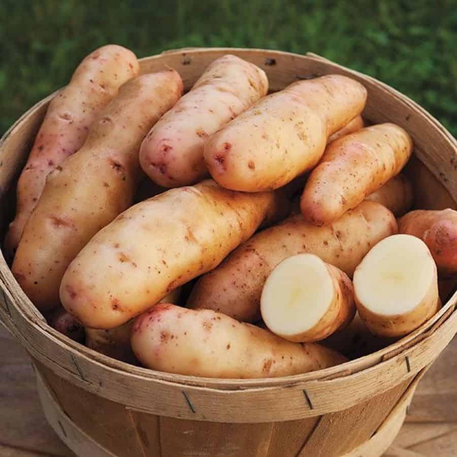 Rose Finn Apple Potatoes