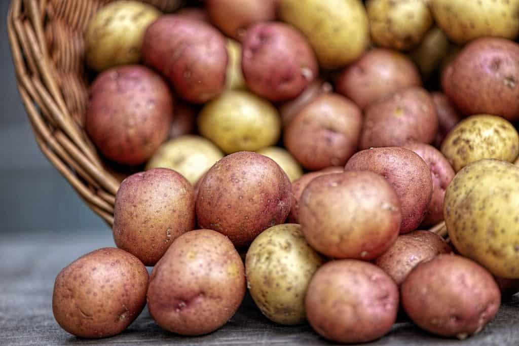 Categories of Potato Varieties